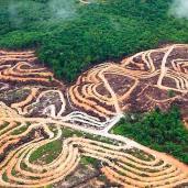 Ontbossing voor houthandel, veeteelt, sojateelt en mijnbouw verwoesten de fauna en leefgebieden van veel bedreigde diersoorten.